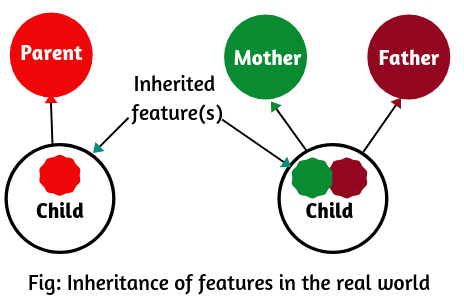 Realtime example of inheritance in java