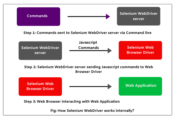 Selenium WebDriver working, Selenium Interview Questions